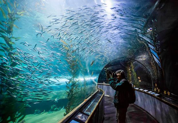 aquarium-of-the-bay-underwater-tunnel-san-francisco-ca-jennifer-rondinelli-reilly
